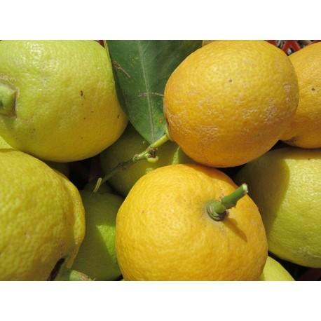 Limoni con foglia