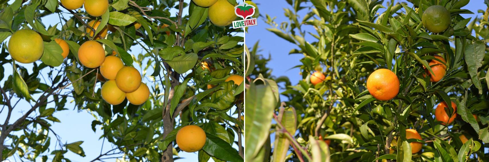 La frutta e la verdura di Febbraio