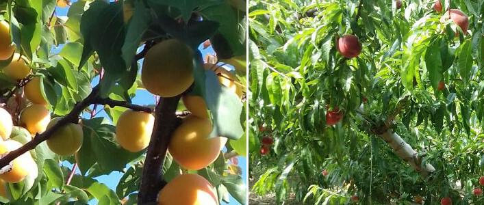 La frutta nel mese di giugno