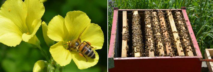 Perchè il miele fa bene