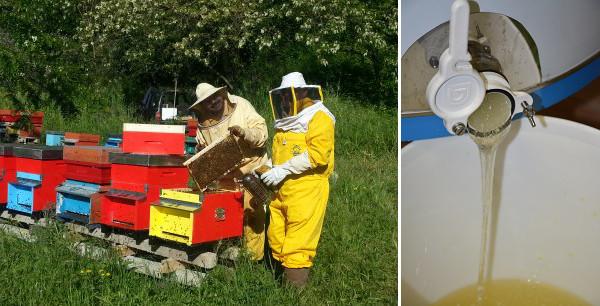 Produzione di miele da vendere online