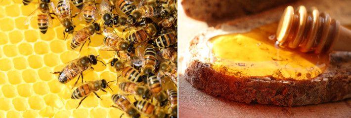 Le proprietà benefiche del miele