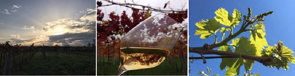 L'azienda vini di Olivastri Tommaso