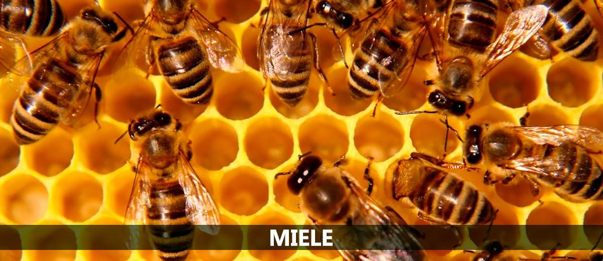 Acquista il miele online direttamente dal produttore